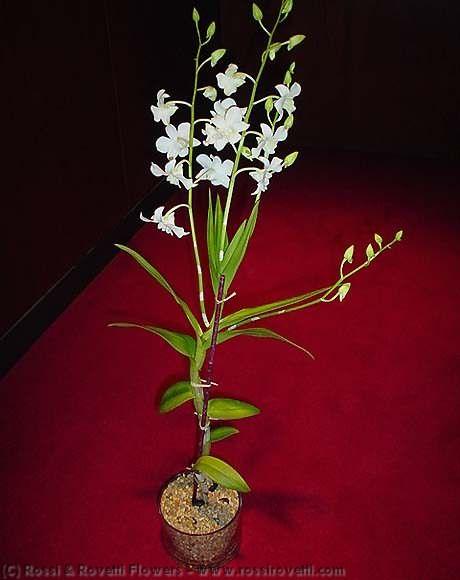 hotel los tulipanes lima: